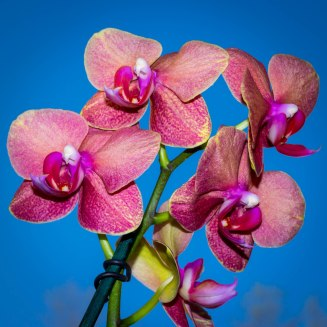 2018 Orchids in the Sun-9704