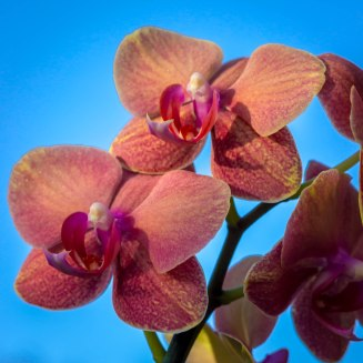 2018 Orchids in the Sun-9712